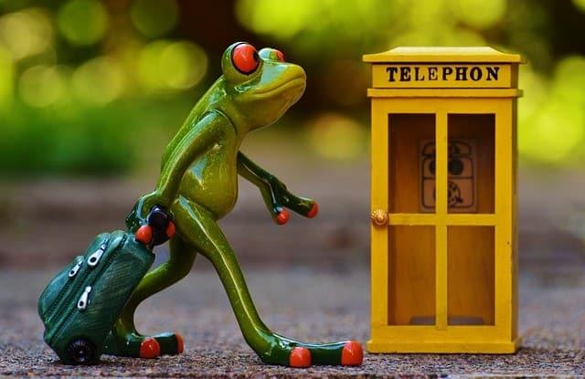 frog-e031b80928_640