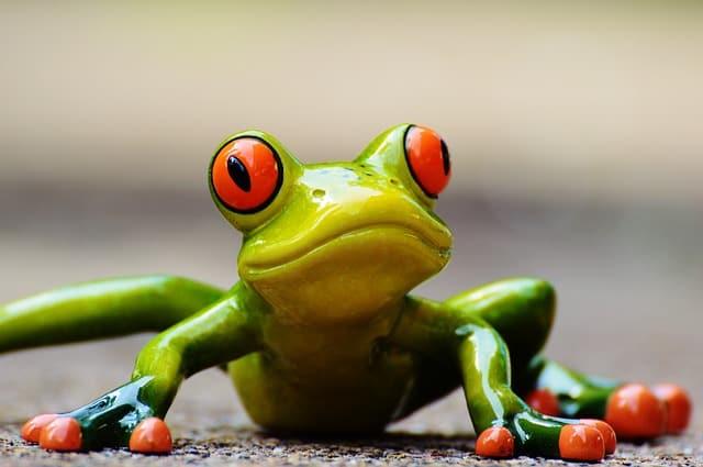 frog-e037b6082e_640-3