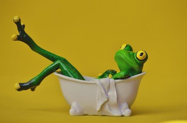frog-e837b5062d_640-3