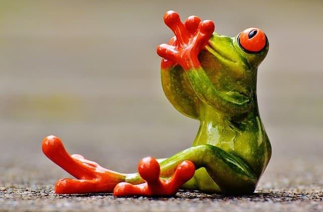 frog-e837b60b2f_640-3