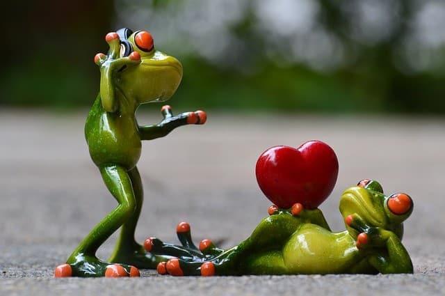 frogs-e035b20e2f_640