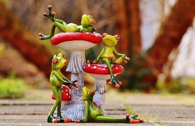 frogs-e834b60a20_640-2