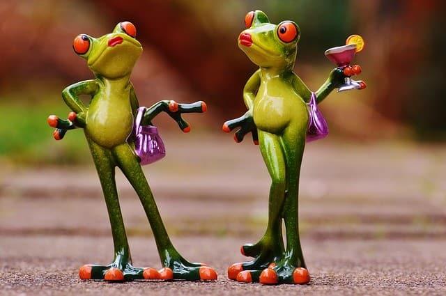 frogs-e834b80620_640