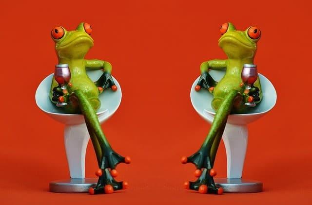 frogs-e836b80821_640-2
