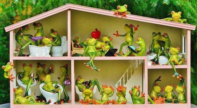 frogs-e836b90d20_640