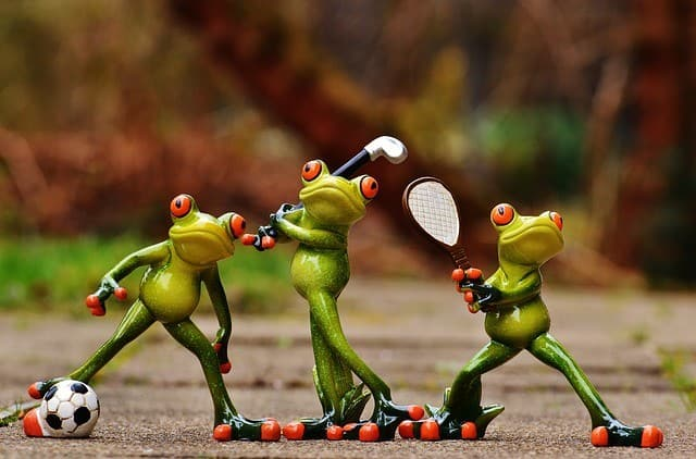 frogs-e837b00d2a_640