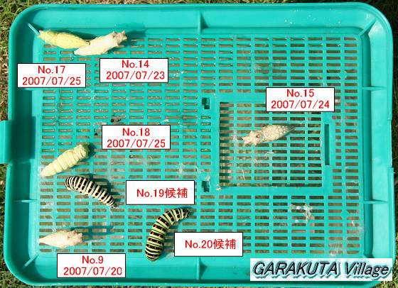P20070725-2-IMG_0031-9