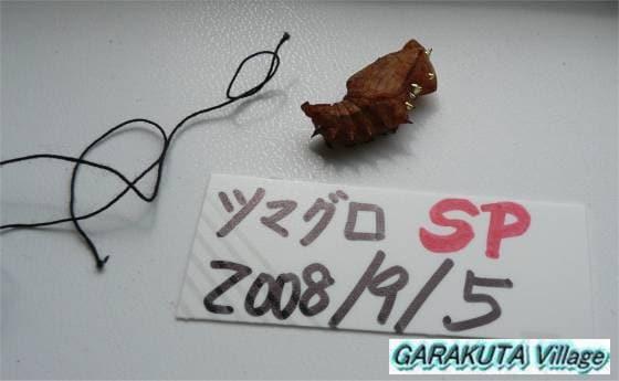 P20080907-P1060248-2