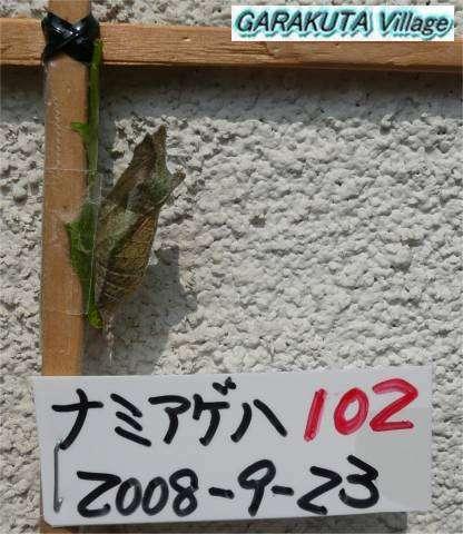 P20080923-P1060845-2