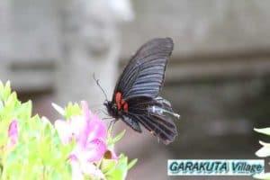 P20110522-IMG_0530